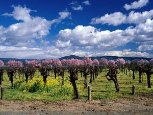 trefethen-napa-vineyards_9139_600x450